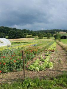 Hier können die Schlitzer Gemüse direkt beim Bauern kaufen.